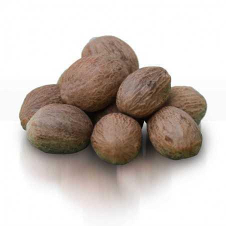 Coconut Muskat 3 Pieces
